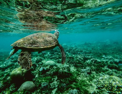 What is the Best Time to See Turtles in Oman?